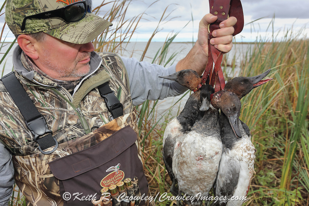 Successful hunter examining the bag of canvasbacks and scaup during a Manitoba Diver Hunt