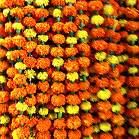 Asia, India, Calcutta. Marigold garlands of the Calcutta Flower Market.