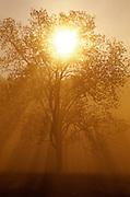Tree at Sunrise-Smoky Mountains N.P.