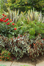 The exotic garden at Great Dixter. Planting includes Begonia 'Little Brother Montgomery', Begonia luxurians, Phormium 'Sundowner' and Dahlia 'Wittemans Superba'