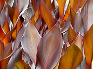 Brown and Silver leaves pointing up