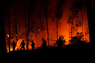 LEIRIA, PORTUGAL - JUNE 19:  National Republican Guards GIPS and firefighters try to extinguish a fire in the forest after a wildfire took dozens of lives on June 19, 2017 near Pedrogao Grande, in Leiria district, Portugal. On Saturday night, a forest fire became uncontrollable in the Leiria district, killing at least 62 people and leaving many injured. Some of the victims died inside their cars as they tried to flee the area.  (Photo by Pablo Blazquez Dominguez/Getty Images)