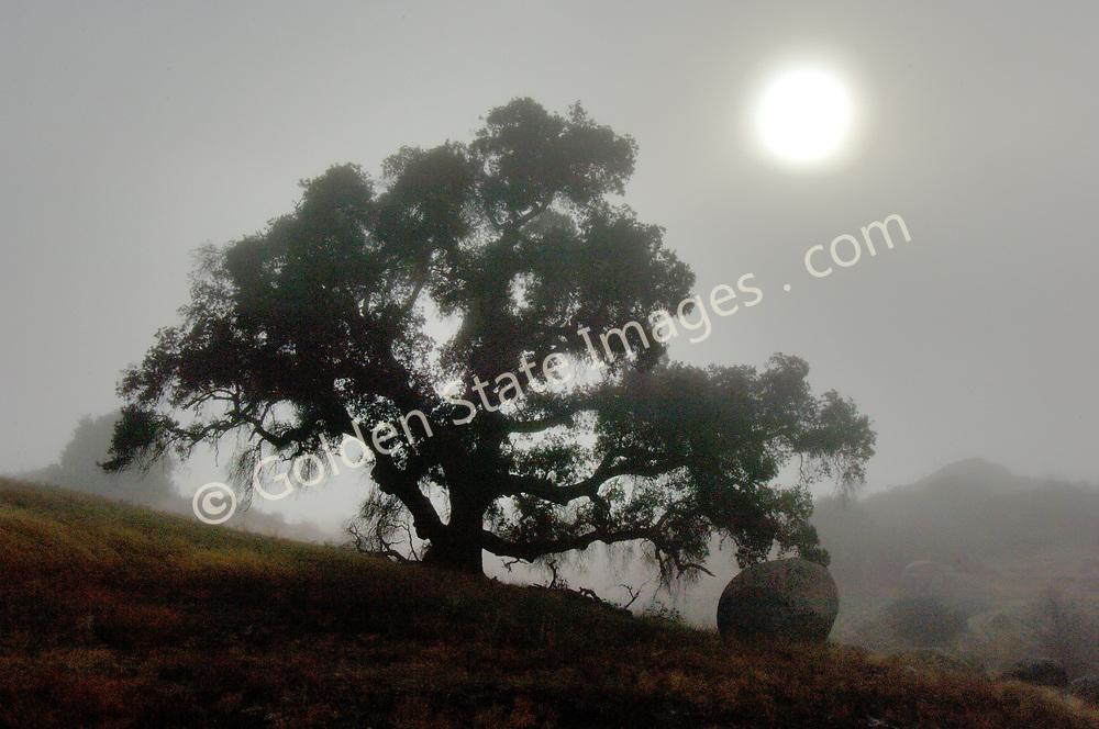 Morning fog with sun shinning through.
