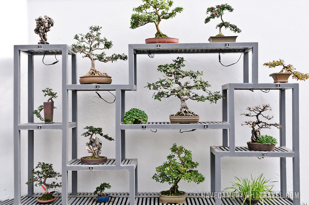 Japanese Bonsai trees on display inside Montreal's Botanical Garden, one of the world's largest indoor botanical gardens featuring a range of different environments from orchids to spices to cacti.