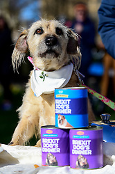 """© Licensed to London News Pictures. 10/03/2019. LONDON, UK. A dog in Victoria Park Gardens, next to the Houses of Parliament, for """"Brexit is a Dog's Dinner"""", a protest to urge MPs to vote to ensure that a no-deal Brexit is avoided and to give the people of the UK a final say.  Next week, there will be a series of up to three votes in the House of Commons where MPs will vote on whether to accept Theresa May's Brexit deal.  Photo credit: Stephen Chung/LNP"""