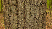 Tree bark. Image taken with a Leica CL camera and 23 mm f/2 lens