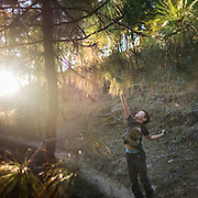 A boy trying to reach for high branches in a pine forest.