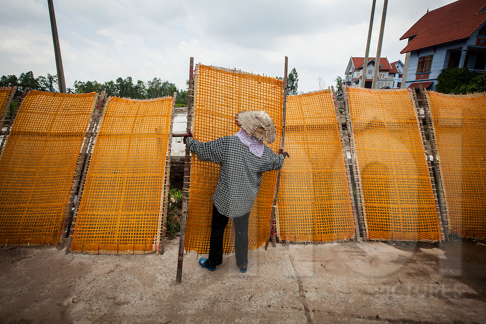 Vietnamese woman lines up bamboo drying racks covered in sheets of orange vermicelli in Cu Da Village, Hanoi, Vietnam, Southeast Asia