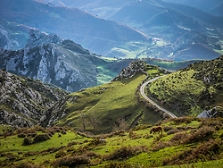 Horse grazing on landscape in the Picos de Europa near Potes. Cantabria, Northern Spain