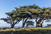 Pacific Grove Shoreline Parkway Marine Refuge, Monterey Bay, Pacific Ocean, California, USA. Monterey was the capital of Alta California from 1777 to 1846 under both Spain and Mexico. It was the only port of entry for taxable goods in California. In 1846 the US flag was raised over the Customs House, and California was claimed for the United States. The city had California's first theatre, public building, public library, publicly funded school, printing press, and newspaper.