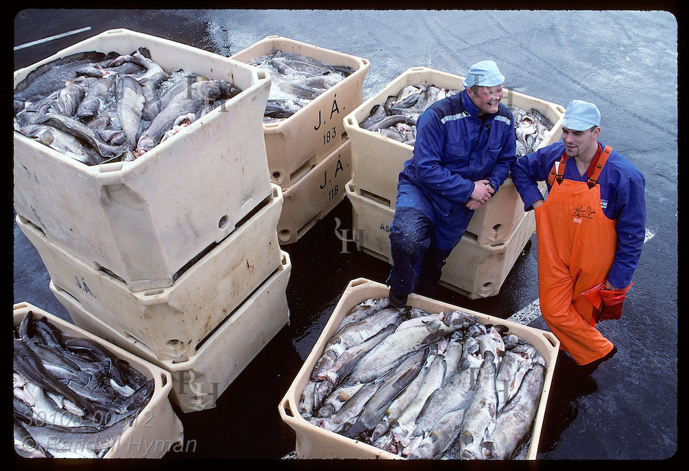 Two longshoremen chat amid bins of cod just loaded off a fishing boat on docks of Reykjavik. Iceland