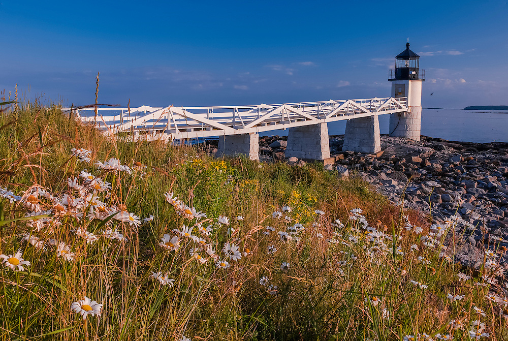 Daisies in bloom & Marshall Point Lighthouse, Port Clyde, St George, ME