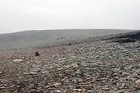 Merket tursti over Trollhetta, marked path over Trollhetta