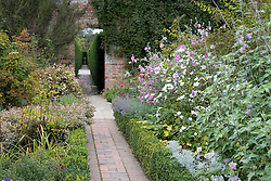 Looking from the Rose Garden along the Yew Walk at Sissinghurst Castle Garden. Planting includes Lavatera 'Lilac Lady' and L. 'Barnsley' with Anemone × hybrida 'Honorine Jobert' AGM