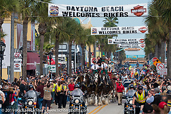 The Clydesdales parade  Main Street during Daytona Beach Bike Week, FL., USA. March 9, 2014.  Photography ©2014 Michael Lichter.