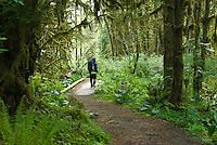HIker walks the Kestner Homestead Trail, Quinault Rain Forest, Olympic National Park, Washington.