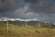 Tree stumps amongst undergrowth against cloudy sky, Sukamade beach, Forest in the background, Meru Betiri National Park, East Java, Indonesia, Southeast Asia