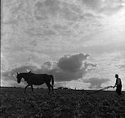 Ploughing at Stoneyford, 05/07/1953<br /> Tilling beet