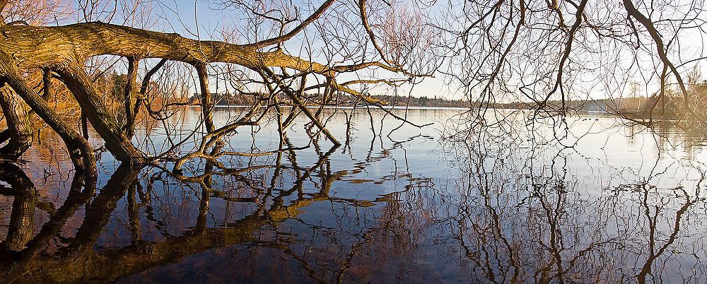 A fallen tree extends horizontally across the still surface of Green Lake, in Seattle, Washington.