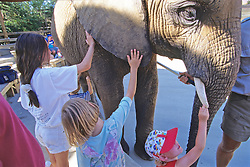 Kids Touching Elephant