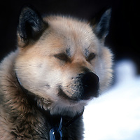Huskies SUN