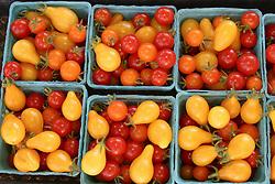 North America, United States, Washington, Seattle, boxes of freshly harvested cherry tomatoes