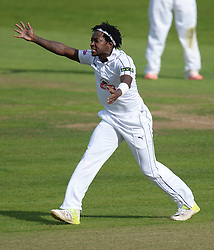 Hamshire's Fidel Edwards unsuccessfully appeals for lwb  - Mandatory byline: Alex James/JMP - 07966386802 - 09/09/2015 - FOOTBALL -  - The County Ground - Taunton  - Somerset v Hampshire - LV CC -