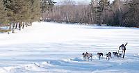 82 annual Laconia Sled Dog Derby February 11, 2011.