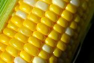 10 JULY 2010 -- EDWARDSVILLW, Ill. -- Fresh corn for sale at the weekly Land of Goshen Community Market in Edwardsville, Ill., Saturday, July 10, 2010. It runs Saturdays until mid-October. Photo © copyright 2010 Sid Hastings.