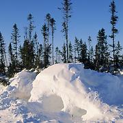 Polar bear den in Wapusk National Park, Churchill, Manitoba, Canada.