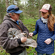 Denver Holt and Liberty of the Owl Research Institute banding a  great gray owl. Mission Valley, Montana