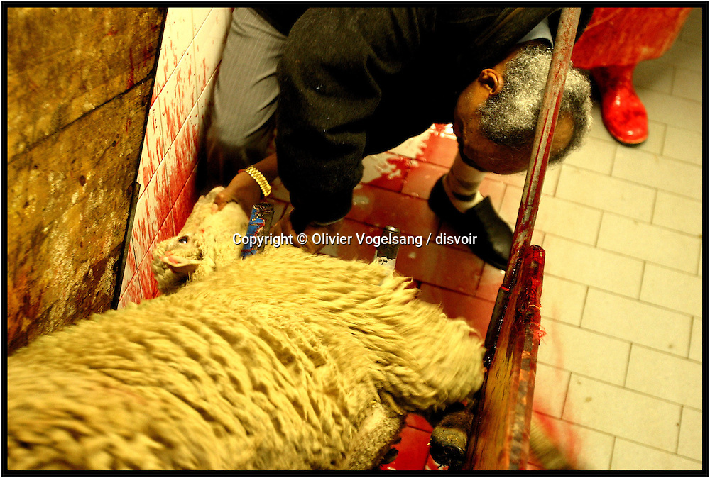 Switzerland. Geneva. Celebration of Aid El Kebir in the mosque. Ritual cutting down the sheep in a special place espacially for that with all the new rules of security and avoid suffering for the animal.