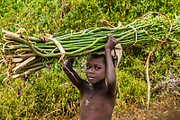 Boy carrying sugar cane, Southern Nations Nationalities and People's Region, Ethiopia.