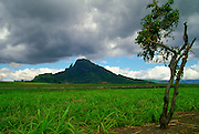 A cloudy sky over a mountain scene on the Indian Ocean island of Mauritius.  Crop of young sugar cane and a lone tree in the foreground.