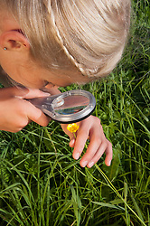 Girl (10-11) examining flowers through magnifying glass, elevated view, close-up