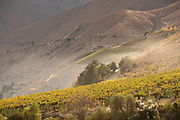 Grape vines in Elqui Valley, Chile