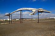 Sperm whale skeleton, Physeter macrocephalus, at Las Salinas del Carmen, Fuerteventura, Canary Islands, Spain