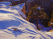 Ponderosa pines on snow-swept edge of Box Canyon within Inscription Rock, El Morro National Monument, New Mexico.