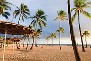 Palm trees on Waikiki Beach at Sunset at the Hilton Hawaiian Village Hotel.