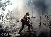 V. 02. Valencia 29/08/2003. Un brigada forestal ayuda en las labores de extinción del incendio de monte que se declaró anoche en Buñol y que ha arrasado ya 500 hectareas. EFE / Kai Försterling.