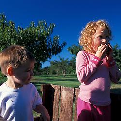 Bolton, MA. USA.  Kids enjoy a day at the Nicewicz Farm in Massachusetts' Nashoba Valley.  Apple orchard. Macintosh apples.