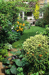 Small town garden with curving lawn. Planting includes Ligularia 'Desdemona', Pittosporum 'Irene Paterson' and Euphorbia griffithii. On house - Clematis montana 'Tetrarose' and golden hop
