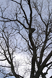 09 April 2005:  A tree bare of leaves stands silouehetted on the sky behind.