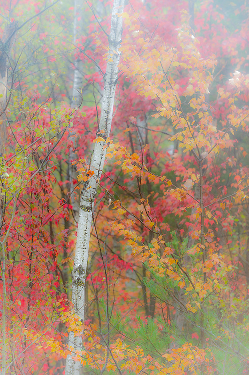 Autumn impresionism, overcast light, October, Crawford County, Michigan, USA