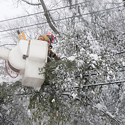 The Wakefield, MA DPW clears snow-covered tree branches from utility lines during a heavy winter storm