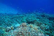 Diving Molokini Crater, Maui Hawaii