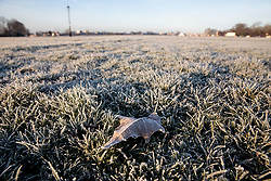 © Licensed to London News Pictures. 31/01/2019. London, UK. A frozen leaf in Blackheath Park in south east London on a frosty, clear morning. Temperatures in London reach minus three degrees Celsius last night. Photo credit : Tom Nicholson/LNP