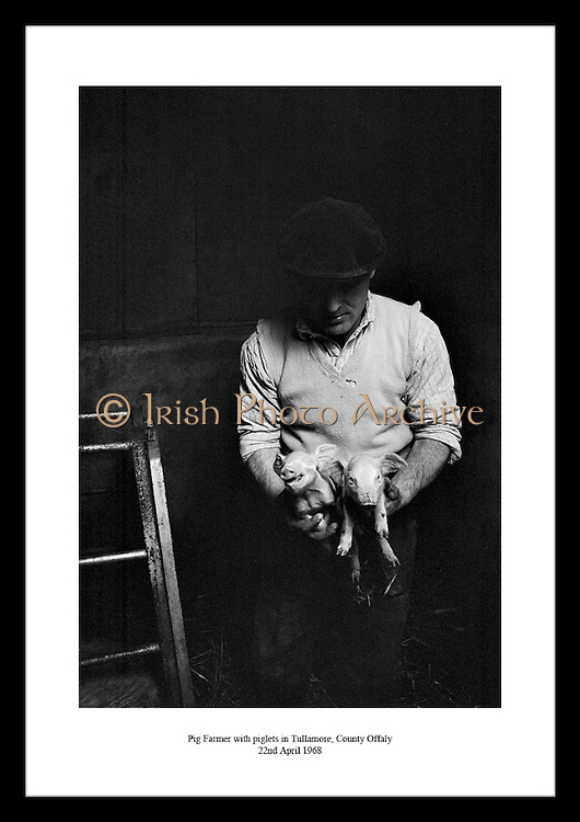 A great shot of a pig farmer with his piglets by Lensmen Photographic Agency. This is the perfect photo gift idea for someone who is interested in Irish vintage photos.
