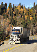 Alaska. View of semi-truck double hauling along the Parks Highway in the fall.
