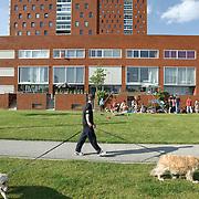 "Nederland Rotterdam 30-05-2009 20090530 Foto: David Rozing ..Nieuwbouw woningen in probleemwijk Katendrecht, man laat honden uit  met op de achtergrond de nieuwbouw woningen. Stedelijke vernieuwing,  lekker weer, huisje boompje beestje, ruime moderne wijk, vrij uitzicht, strand New houses / appartments in (former) deprived area / projects ""Katendrecht "" This area is on a list with projects which need help of the government because of degradation in the area etc   ., project, suburb, suburbian, problem. Neighboorhood, neighboorhoods, district, city, problems,  daily life Holland, The Netherlands, dutch, Pays Bas, Europe ..Foto: David Rozing"